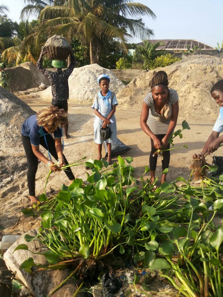 MitiMeth Water Hyacinth